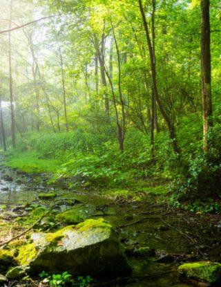 Recursos naturales bajo la mirada legal